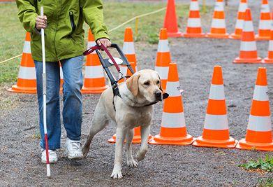 Conociendo los perros guías